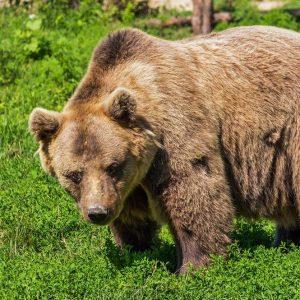 In Borsa torna l'Orso: Piazza Affari è la peggiore