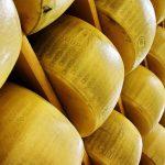 Parmigiano Reggiano, l'Intelligenza artificiale aiuta i piccoli produttori