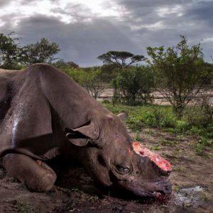 Wildlife Photographer of the Year, anteprima della 53a edizione