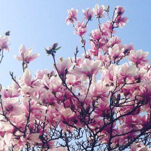 Borsa, il portafoglio di primavera: banche, energia e ciclici