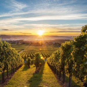 Vino: l'export cresce, ma bisogna diversificare