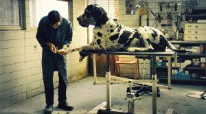 Una scena del film Dogman