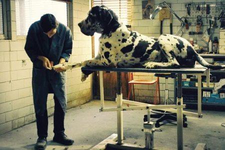 Cinema: Dogman, il canaro della Magliana secondo Garrone