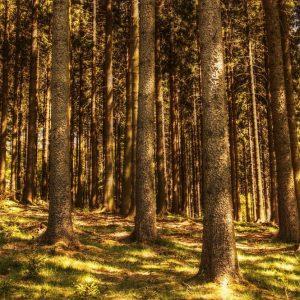 Genagricola investe in Romania e punta sulle foreste