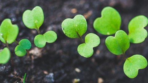 Enea, ecco il giardiniere virtuale per diventare pollici verdi