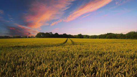 Fondi europei, così l'agricoltura italiana rischia il flop