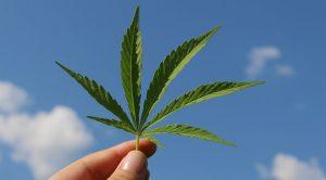 Cannabis borsa e investimenti