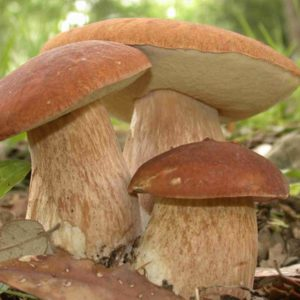 Non sempre il maltempo viene per nuocere, con le piogge funghi a iosa
