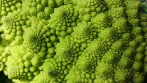 I broccoli, piatto povero ma miniera di vitamine e altre virtù