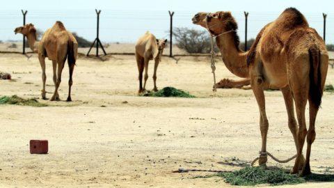 """Prodotti """"firmati"""" dagli agricoltori italiani per il Qatar"""