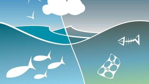 Oceani, nel 2050 ci sarà più plastica che pesci