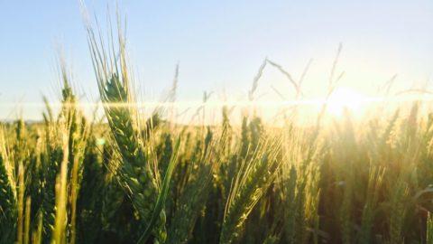 Spighe Verdi: il Piemonte in testa ai comuni rurali virtuosi per gestione del territorio