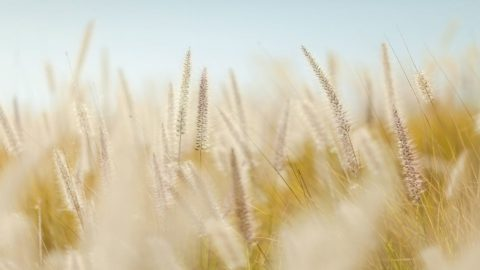 Rapporto Fao su biodiversità e allarme Slow Food