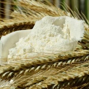 Pasta e pane: i grani antichi conquistano le Crete senesi