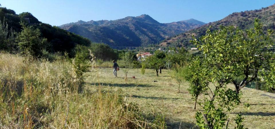 Credem pianta oltre 250 alberi in Sicilia