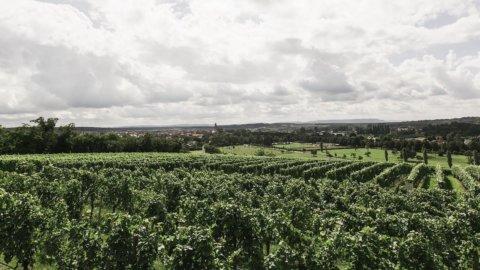 Vino biologico, agli italiani piace sempre di più bere naturale