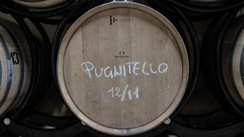 Dal cinema al vino: lo svizzero scopre il Pugnitello Toscano