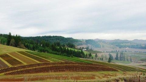 Imu terreni agricoli: Decreto Crescita fa chiarezza su società IAP