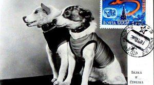 I cani dello Sputnik