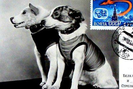 ACCADDE OGGI – Cinquantanove anni fa i primi cani nello spazio
