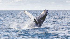 Balena in mare