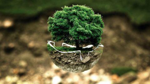 Premio Impresa Ambiente: Enel tra le 5 aziende vincitrici