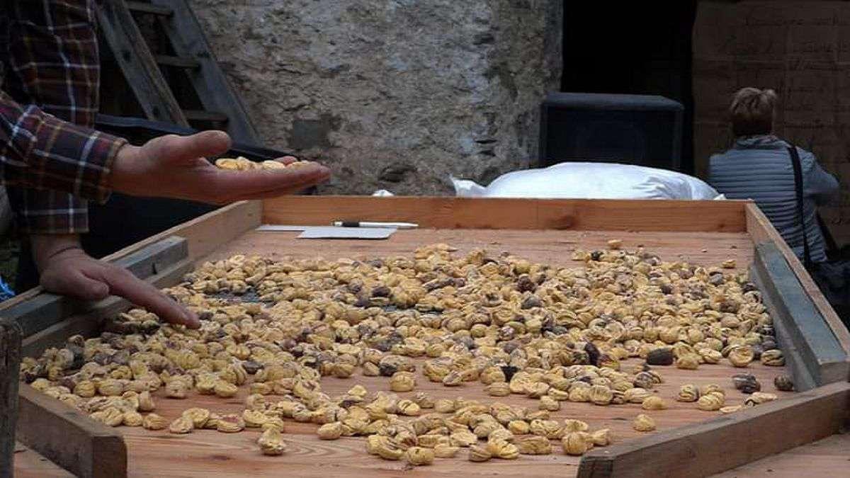 Castagne secche di Calizzano e Murialdo su tavolaccio foto Valentina Venuti