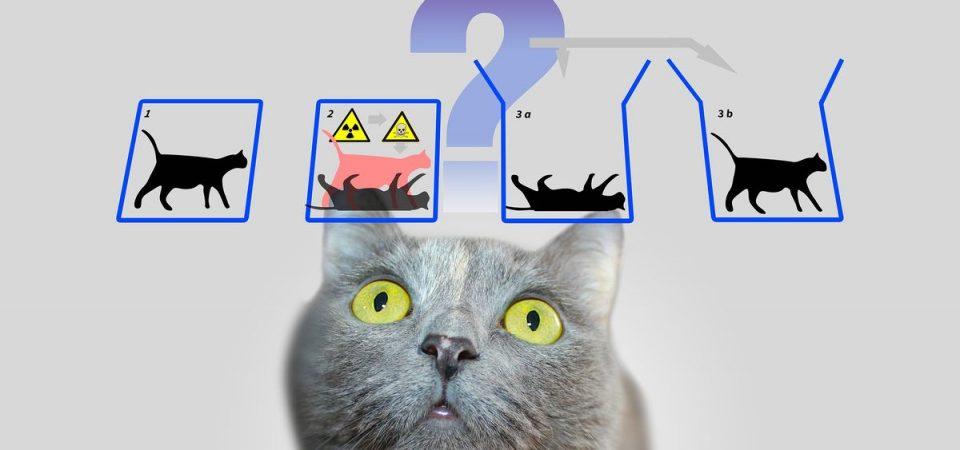 Il computer quantistico di Google e il paradosso del gatto di Schrödinger