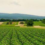 """Terreni agricoli collettivi: dimenticati dalla politica e da considerare """"bene comune"""""""