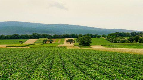 """Confagricoltura lancia """"Agrosocial"""": programma contro la crisi"""