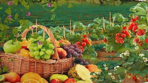 Vocabolario del contadino: guida ai prodotti stagionali