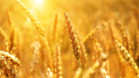 Volano i prezzi agricoli, spinta al rialzo per  Cnh