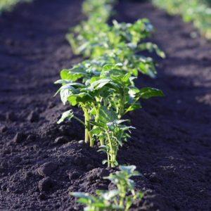 Post Covid 19: agricoltura sostenibile a rischio