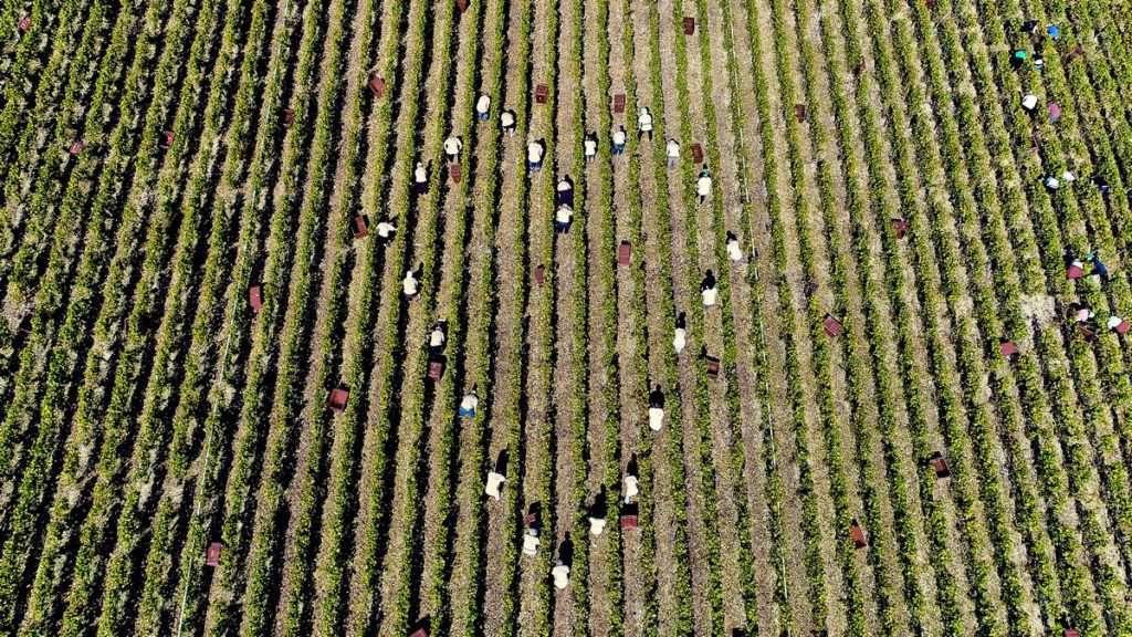 Vignerons all'opera neiterreni dello Champagne Comte de Montaigne