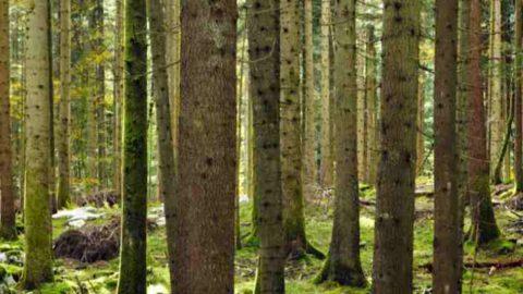 E.ON Energia pianta alberi per la riforestazione in Italia