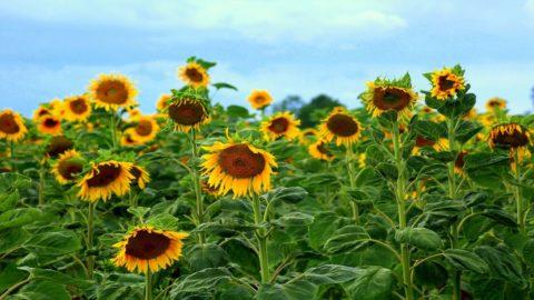 Agroalimentare: è andata meglio di altri settori con il Coronavirus