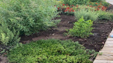La ricetta di Daniele Usai: un giardino iodato stellato… e salutare