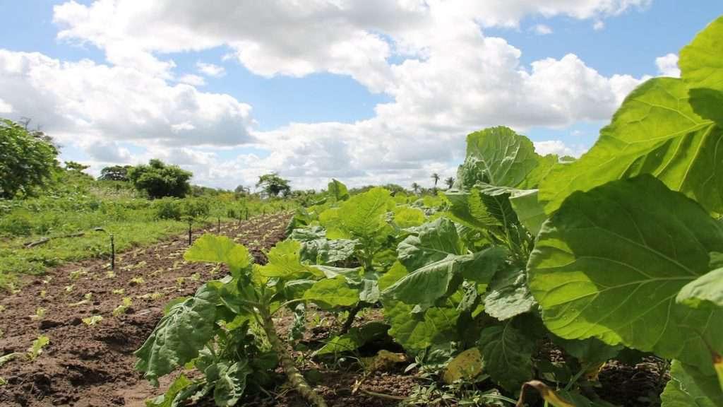 agricoltura biologica Foto di feraugustodesign da Pixabay