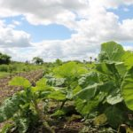 Salvi: cambiamento climatico, una vera e propria pandemia per l'agricoltura