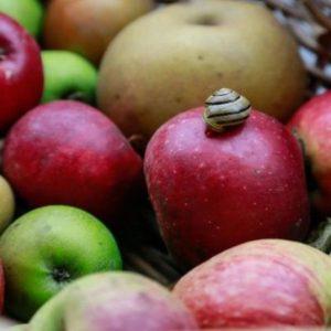 Una mela toglie il medico di torno… ma il fruttosio lo fa ritornare