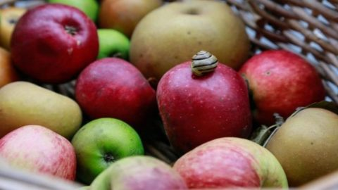 Coronavirus: gli italiani ricorrono alle mele, crescono i consumi