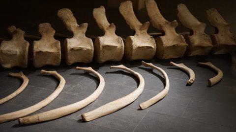 Arte contemporanea e storia naturale al Museo Marino Marini