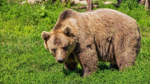 Borse: l'Orso corre anche in Asia, ma Milano tenta il rimbalzo