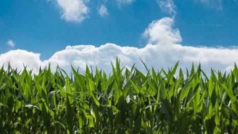 Agroalimentare: i decreti OGM fanno discutere
