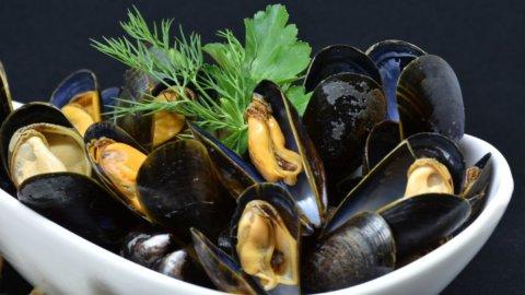 Le cozze italiane: il frutto di mare principe dell'estate