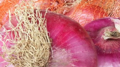La Dolcissima di Breme: la cipolla rossa dalla storia millenaria