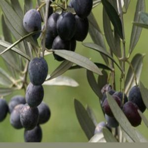 Oleoturismo: una grande opportunità per tutti gli operatori della filiera