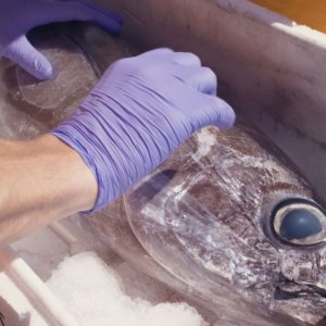 """""""Ri-pescato"""": il pesce sequestrato va ai bisognosi"""