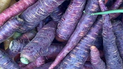 La carota viola: un concentrato di sapori e salute da rivalutare