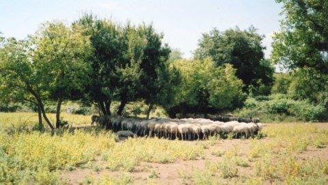 Il MES, la pastora e lo stigma